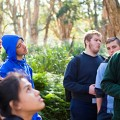Image of students in parklands looking up at trees